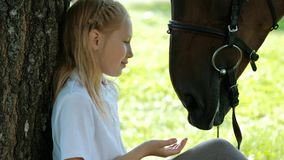 Girl teenager jockey sits in a green clearing under a tree. Feeds a horse an apple and strokes it. Love for horses stock video