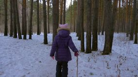 Girl teenager walking in evening winter forest. Girl walking among trees in winter forest back view. Girl teenager walking in evening winter forest and using stock footage