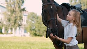 Girl teenager walks on the field with a brown horse. Hugs and feeds her apples stock video footage