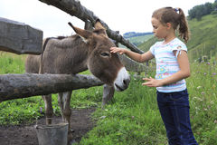 Girl tenderly stroking a donkey. Stock Photo