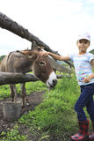 Girl tenderly stroking a donkey. Stock Images