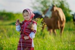 Girl tending cows Royalty Free Stock Photo