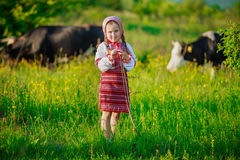 Girl tending cows Royalty Free Stock Images