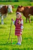 Girl tending cows Stock Image