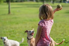 Girl throwing ball for a dog Royalty Free Stock Images