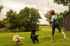 Girl throwing ball for Labrador Retrievers stock photography