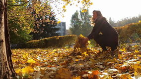 A girl throws yellow leaves from the tree branches. Happy, smiling girl walking in autumn park breaks large yellow leaves of the tree and collect them in a stock video footage