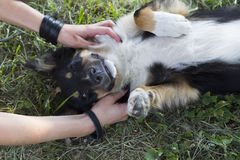 Girl tickles a mongrel, who lies on his back on the grass royalty free stock photo