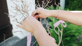 The girl ties a pink ribbon to a dry decorative tree. Gender party. Event. Holiday stock video