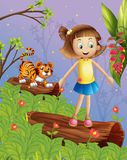 A girl and a tiger in the forest Stock Image