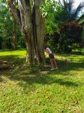 Girl touches a big tree in a park in jamaica Stock Image