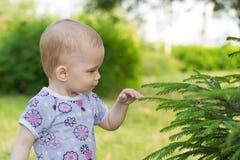 Girl touches green branch of a fir. Girl touches and studies a green branch of a fir stock images