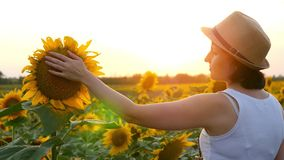A girl touches a sunflower hat in a field during sunset stock photography