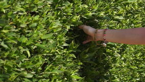 Girl touching her hand green fence stock footage