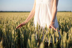 Girl touching wheat Royalty Free Stock Photography