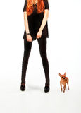 girl with toy terrier dog Royalty Free Stock Photos