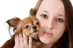 Girl and toy terrier Stock Image