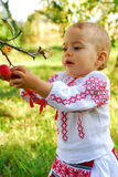 Girl in traditional costume reaching an apple Royalty Free Stock Photography