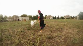 Girl in traditional folk Ukrainian handmade clothes and goats on a leash in the field. Collection, a girl in a traditional Ukrainian folk costume in the village stock video footage