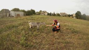 Girl in traditional Ukrainian folk clothes and goats in a field in the village stock video footage