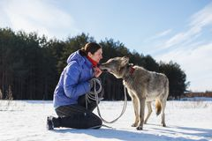 Man feeds his Husky dog biscuits from mouth to mouth outdoors in winter snowy weather. royalty free stock photography