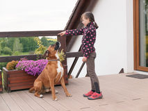 Girl training big dog Stock Photography