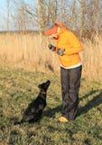Girl training black dog Stock Images