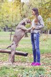 Girl training a dog Royalty Free Stock Images