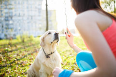 Girl training dog at park. Girl training labrador dog at park in spring afternoon Stock Images