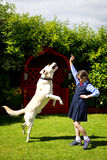 Girl training the dog. Small girl is training her dog Stock Photography