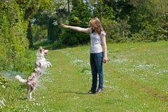 Girl training her dog stock photo
