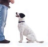 Girl training here dog Stock Photo