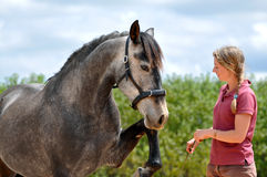 Girl training horse. Girl training a young horse to perform Spanish walk at liberty Stock Photography