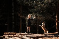 Girl trains dog Border Collie breed in the forest royalty free stock photo
