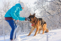 Girl trains her dog German Shepherd. Girl trains her German Shepherd. German Shepherd playing with toy and his mistress in winter sunny day. Girl walks her Royalty Free Stock Photos