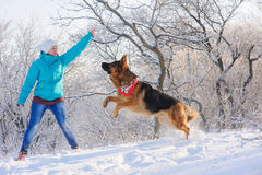 Girl trains her dog German Shepherd. Girl trains her German Shepherd. German Shepherd playing with toy and his mistress in winter sunny day. Girl walks her Stock Images