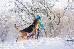 Girl trains her dog German Shepherd. Girl trains her German Shepherd. German Shepherd playing with toy and his mistress in winter sunny day. Girl walks her Stock Photo