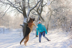 Girl trains her dog German Shepherd. Girl trains her German Shepherd. German Shepherd playing with toy and his mistress in winter sunny day. Girl walks her Royalty Free Stock Photo