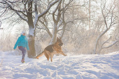 Girl trains her dog German Shepherd Stock Image