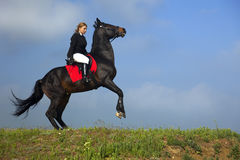 Girl trains the horse Royalty Free Stock Photography