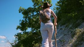 A girl traveler with a backpack and a wooden stick is walking along a path located on a steep slope in the mountains. She is surrounded by grass, bushes and a stock video