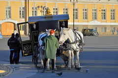 Girl treats carrot-drawn carriage white horse at the Palace squa. Re in Saint-Petersburg Stock Image