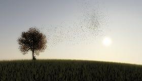 Girl Tree Birds Stock Image