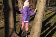 A girl in a tree. A girl climbing in a tree royalty free stock image