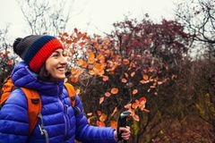A girl with trekking sticks. A girl with trekking sticks walks along a forest trail. Skyrunning in the fall. Active recreation in nature. A woman is walking on Royalty Free Stock Image