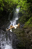 Girl in a tropical waterfall Stock Images