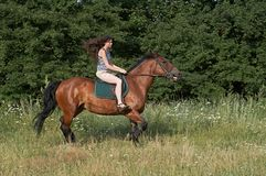Girl trot a horse Royalty Free Stock Photos