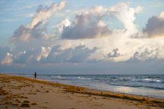 The girl is trotting along the shore of the beach that has a lot of sargasso. royalty free stock photo
