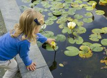 Girl trying picking water lily flowers royalty free stock photos