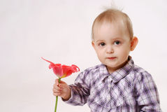 Girl with tulip Royalty Free Stock Photos